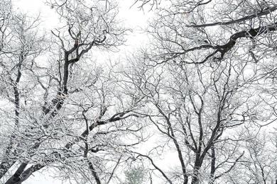 Winter's Edge II