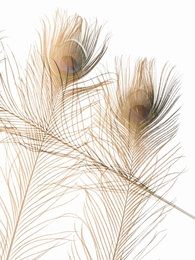 Feathers #2