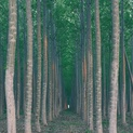 Tree Farm XXI