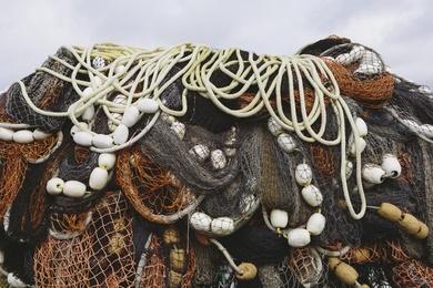 Fishnet Study VII