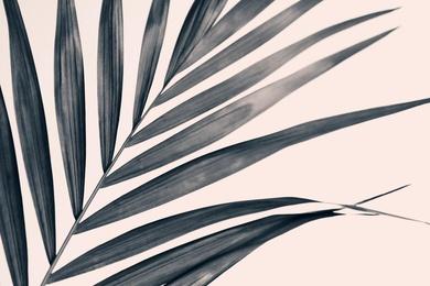 Gray Palm #1