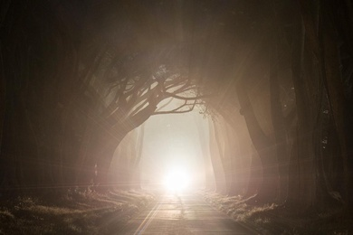 Cypress Tree Tunnel 3