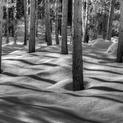 Shadows of Nature