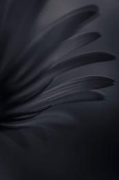 Dark Flower 4