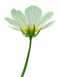 Macro Flower 17