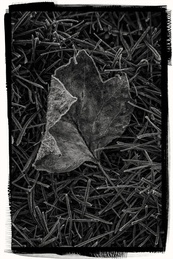 Autumn Artifact |One