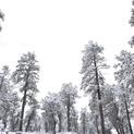 Snow Days #18