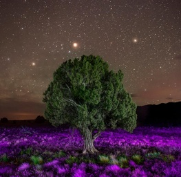 Desert in Bloom #1