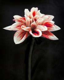 Botanical 59