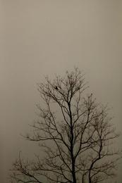 Mist and Bird 3