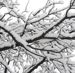Winter III.