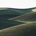 Palouse Hills XI