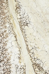 Fossil Site Study XXIX