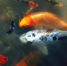 Arboritum Fish