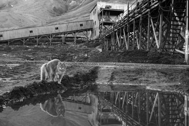Cat in a Coalmine