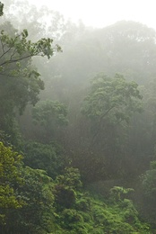 Foggy in the Jungle