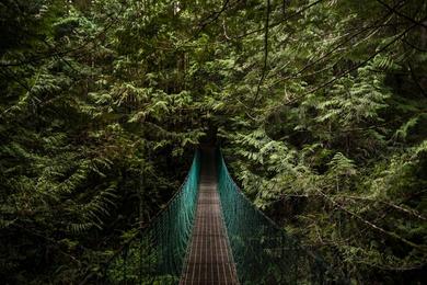 Bridge to the Wilderness
