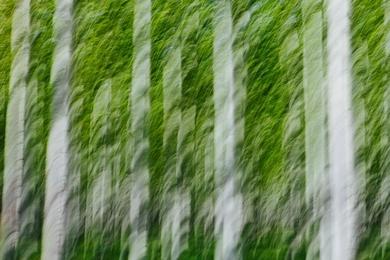 Poplar Abstract