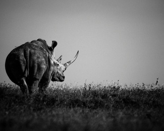 Rhino in the Horizon, Kenya