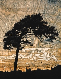 Cypress I