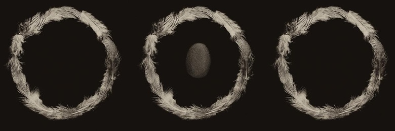 Ring of Feathers IV