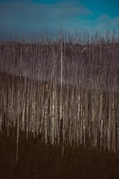 Treeline 1