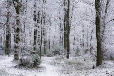 Hay Woods #3 - Jan 2021