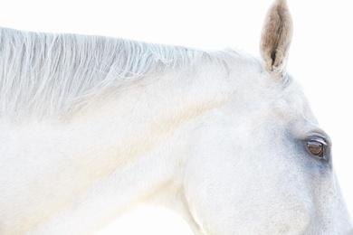 White Horse 07