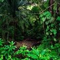 La Selva I