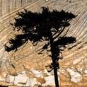 Cypress III