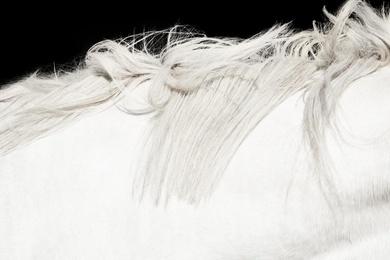 White Horse on Black 01