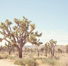 Pale Desert 1