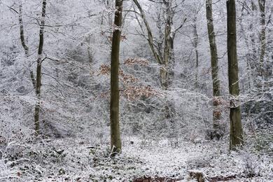 Hay Woods #4 - Jan 2021
