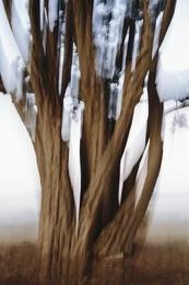 Cypress Abstract I