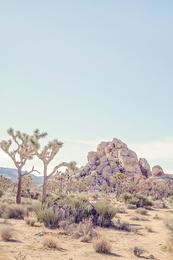 Mojave #2