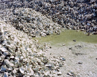 Oysterscape III