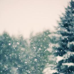 Winter Daydream #1