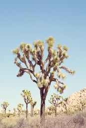 Mojave #3