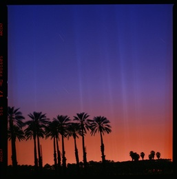 Palms in the Desert
