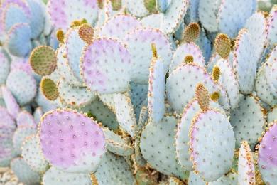 Prickly Pastels #1