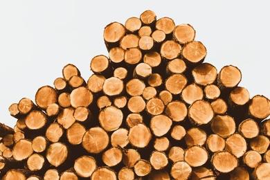 Wood Pile II