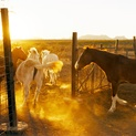Horses II