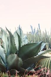 Cactus Garden #2