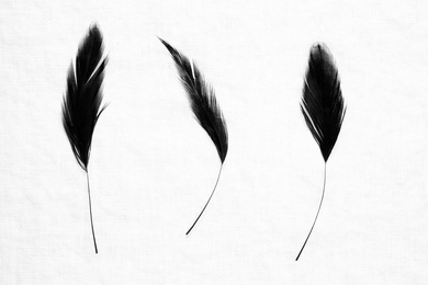Three Feathers I