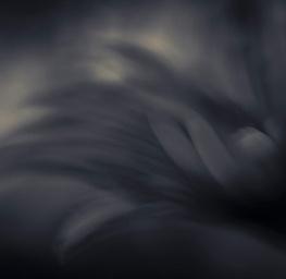 Dark Flower 5