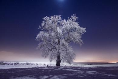 The Haloed Tree #2