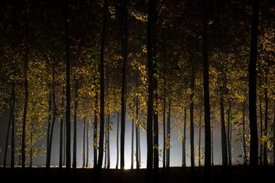 Autumn at the Tree Farm VI