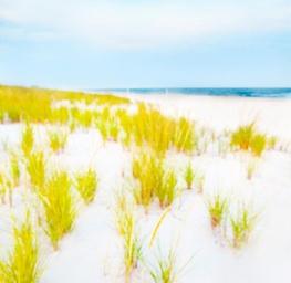 Hamptons Dunes