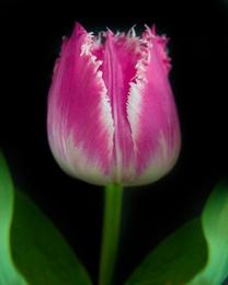 Botanical 54