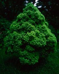 Treelet #1